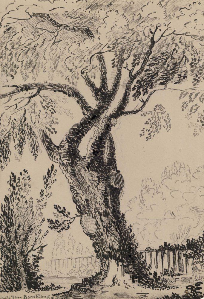Abele Tree Barn Elms