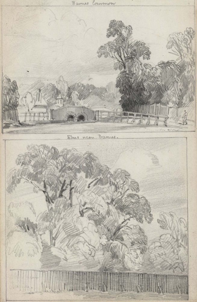 Barnes Common / Elms near Barnes